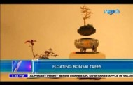 Floating Bonsai Trees