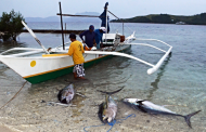Pagpapatupad ng marine protection at fishery laws sa Romblon, mas paiigtingin