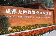 Chengdu Research Base, nananatiling paboritong destinasyon sa China