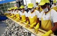 Presyo ng mga sardinas, posibleng tumaas