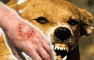 Rabies awareness month, ginugunita....Bilang ng mga nabiktima ng rabies, bumaba