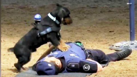 Police dog, ipinakita ang kaniyang CPR skills