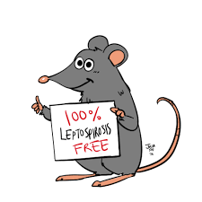 Department of Health,nagbabala sa publiko kaugnay ng Leptospirosis