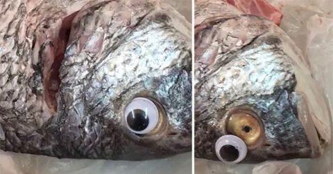 Fish shop sa Kuwait, ipinasara dahil sa plastic eyes na nilalagay sa panindang isda