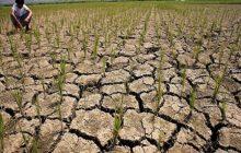Pinsala sa agrikultura ng El Niño, umabot na sa 4.35 bilyong piso