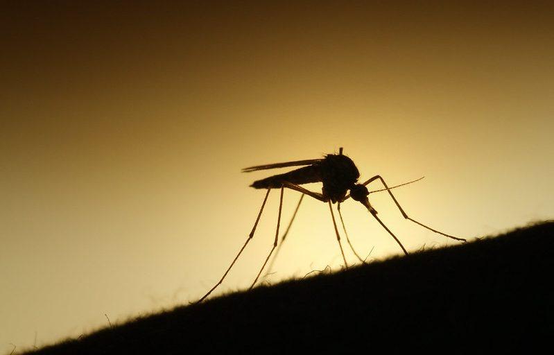 Mga nasawi dahil sa West Nile outbreak sa Spain, umakyat na sa apat