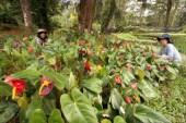 'Plantdemic' sa Pilipinas