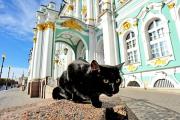 Hermitage cats ng Russia, pinamanahan ng isang French doctor