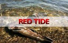 Red Tide alert, itinaas sa baybayin ng apat na lalawigan sa bansa