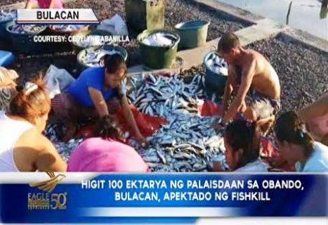Fishkill sa Obando, Bulacan, napigilan na- BFAR