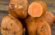 Kamote tinawag na superfood dahil sa taglay nitong sustansya na makatutulong sa kalusugan